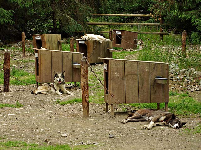 Sled Dog House